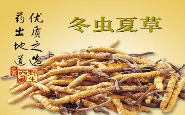 深圳回收冬虫夏草